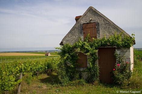 loge-de-vignes-Manuel-Gagnard-Bléré-vallee-du-Cher-Val-de-Loire-Touraine-oenotourisme-visite-vignoble-Rendez-Vous-dans-les-Vignes