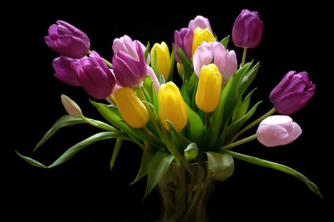 Colorful tulips with a black background.