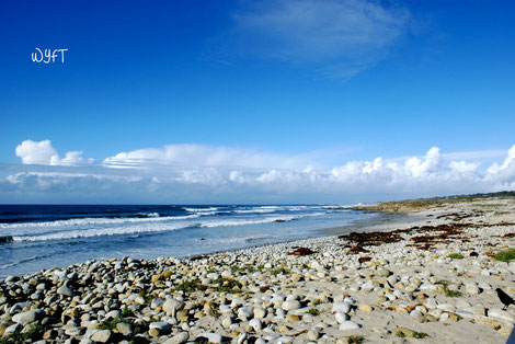 At 17-Mile Drive, Pebble Beach CA.