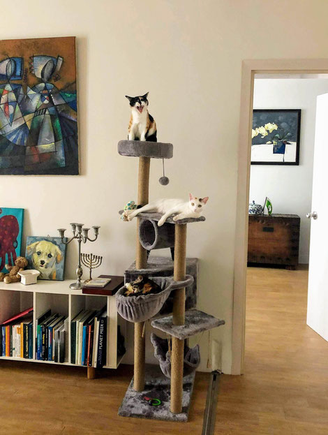 Betreuung-unserer-Katzen-erfolgt-durch-professionelle-Katzennanny-in-Saigon
