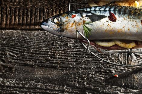 Frisch gefangene und geräucherte Makrele