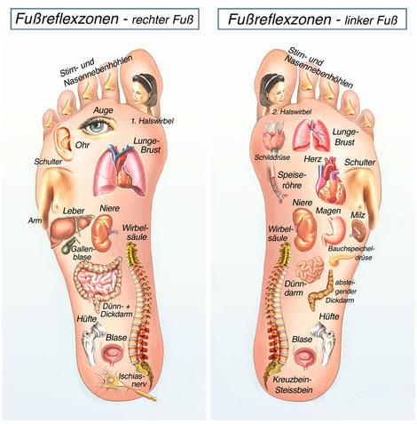 Fußreflexzonen rechter und linker Fuß Akkupressurpunkte