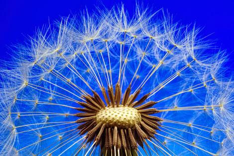 Angenommen unsere Fähigkeiten und Stärken wären wie Samen einer Pusteblume, wie würde Ihr Leben aussehen, wenn jeder Samen die Chance bekommen würde zu einer Blume heranzuwachsen?