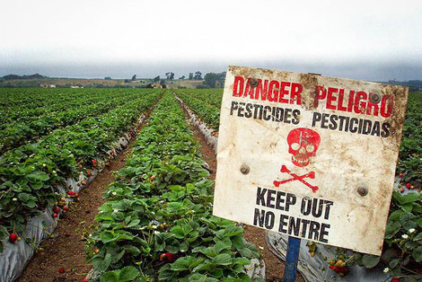 A sign outside a strawberry that advises people to not go near the strawberries if they have been sprayed with pesticide