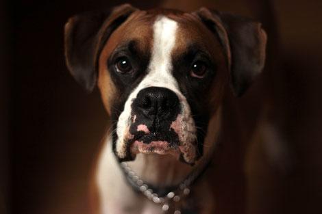 Des Home-sitters racontent une garde de chien pendant les vacances