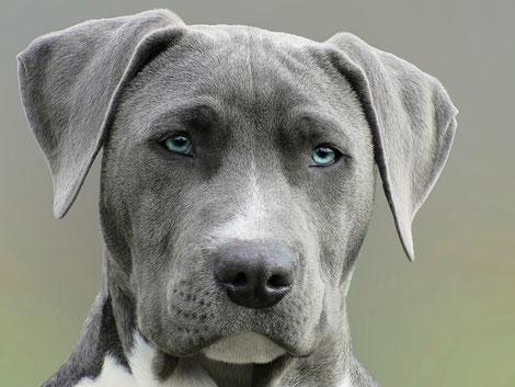 comment faire garder son chien