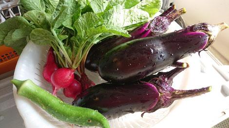 家庭菜園で収穫した野菜たち