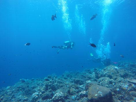 Bali, 2017, Coral Garden, Tulamben, Zwei auf Achse, USS Liberty, Tauchgang, Tauchen, Indonesien, Amed, Taucher, Fische,