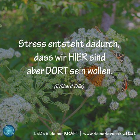 LEBE in deiner KRAFT   Stress entsteht dadurch ...