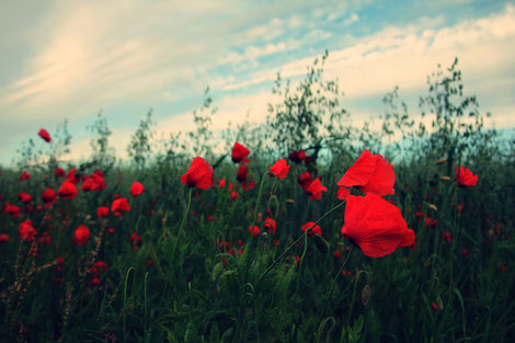 Bachblüten helfen, Emotionen zu regulieren und eigenen Kräften zu vertrauen