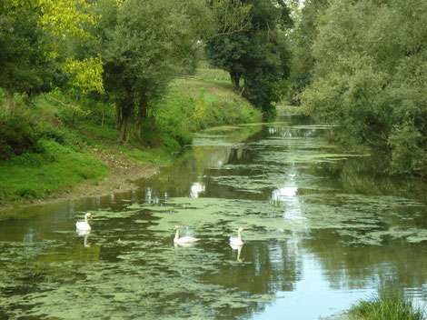 Rivières naturelles de la Bresse