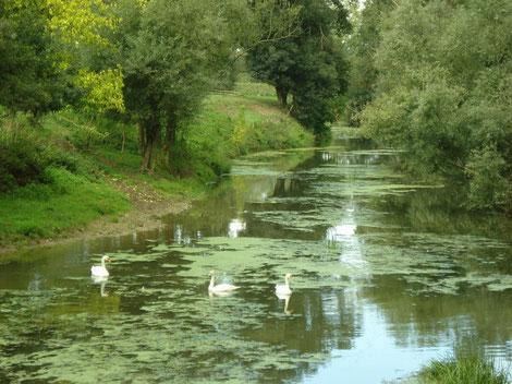 Unverbaute Flussläufe in der Bresse