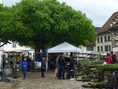 Geranienmarkt unter den Kastanienbäumen bei der Oberen Kirche