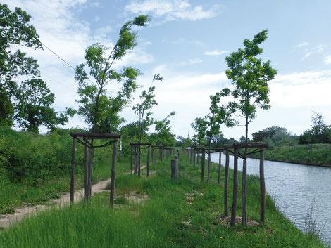 Plantation d'arbres ©VNF