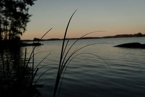 Vegetation Baven See Schweden