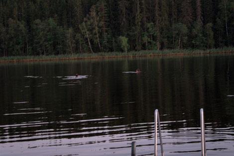 Badestelle See, schwimmende Personen