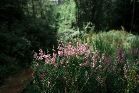 Blühende Sträucher, Nationalpark