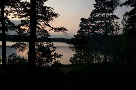 Nadelhölzer, See Schweden