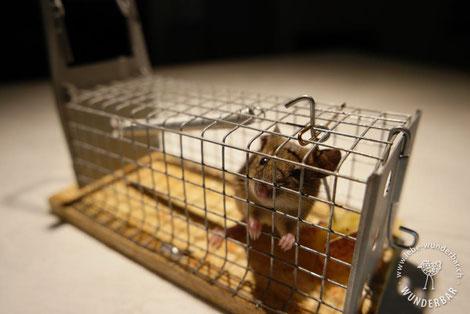 Gestaltungsfreiheit: Maus in Lebendfalle auf Arbeitsplatte mit neuer Beschichtung