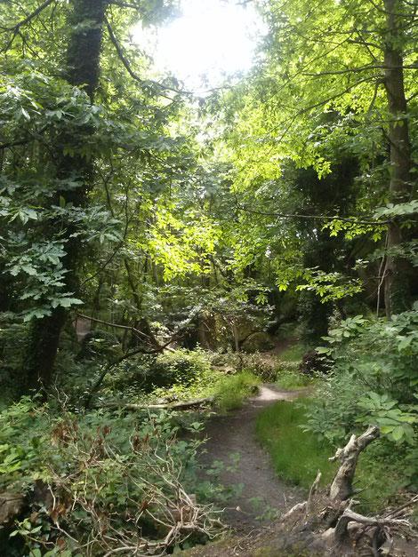 forêt de Lancerf de 600 hectares qui va jusqu'à la rivière du Trieux et du chateau de la Roche Jagu