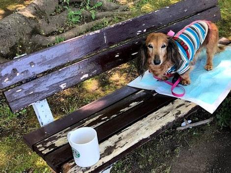 公園でお茶する時間が贅沢に感じます