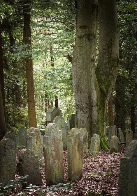 Mächtige Bäume konnten heranwachsen, seitdem die Grabsteine stehen