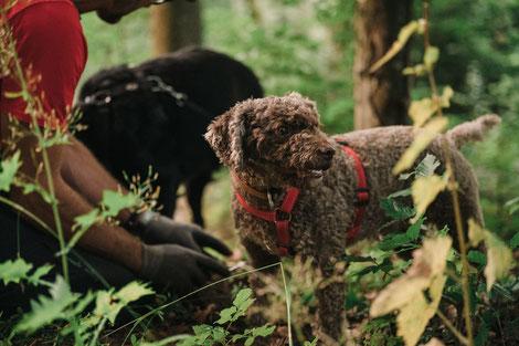 Trüffel, Hund, Trüffel suchen, Trüffel finden, Trüffelprodukte, Trüffelöl, Trüffelkurs, Trüffelseminar, Trueffelschnueffel, trüffel graben, trüffelrezept, trüffel zubereiten, Pilze, Rezepte, Kochen, Trüffelkurs, Trüffelseminar, Trüffel Hund ausbilden,