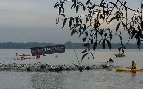 Startschuss zur 1500m-Schwimmstrecke