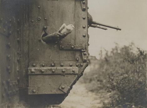 Militär-Brieftauben aus Panzer gestartet. Brieftauben im Weltkrieg, Brieftauben im Krieg, Brieftauben überbringen Nachrichten