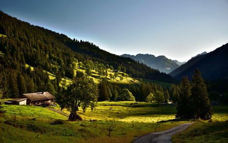 Schweiz, Alpen, Berner Oberland, Panorama, Himmel, Berge , Wiese, Kuh, Schnee, Europa, Bergstaion First, Wandern , Hüttentrekking , Berggipfel, Blau .