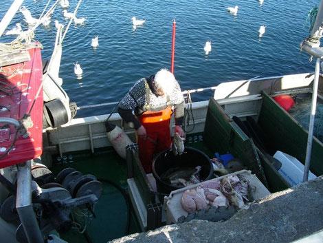 Fischerhafen von Alesund