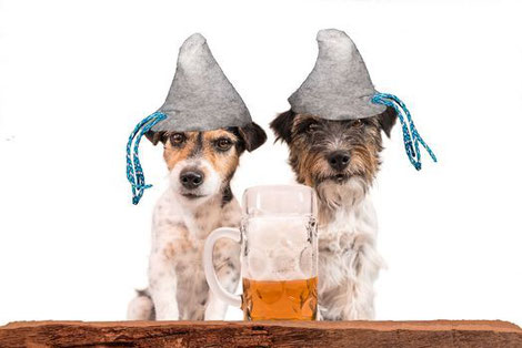 Dogtoberfest Hundeevent Oktoberfest Hunde München Hund Veranstaltung Leinen Los