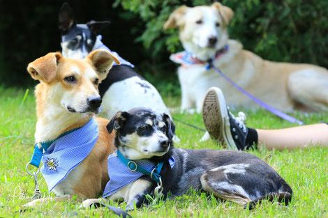 Dogtoberfest, Hundespielwiese Leinen Los, Hunde, Hundeshooting, Fotos, Hundefotos, Hundefotograf, München, Bayern