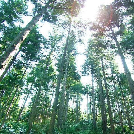 天木森(てんこもり)森の力