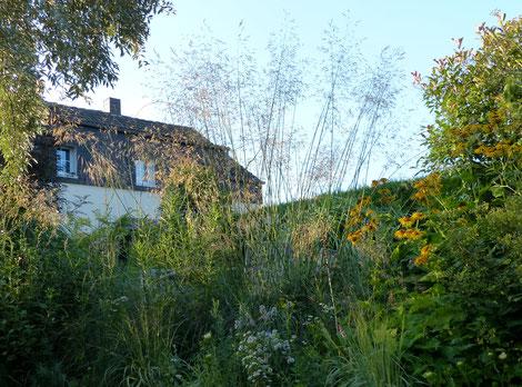 Riesenfedergras, Federgras, Stipa gigantiea, Riesen-Federgras im Sommer wie ein Fächer, Schleier
