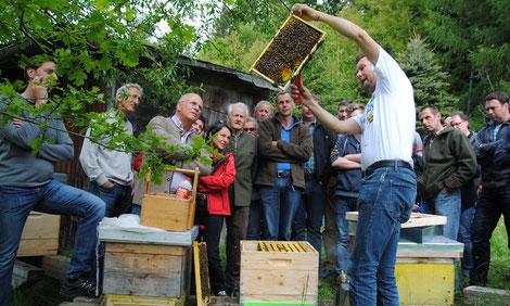 Bienenhaltung - faszinierend, vielseitig und komplex!