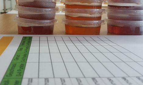 An der Kärntner Imkerschule sind die Vorbereitungen für die anstehende Honigsensorik voll angelaufen