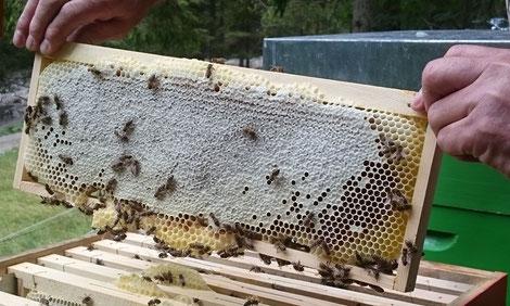 Das Honigreferat des Landesverbandes für Bienenzucht in Kärnten.