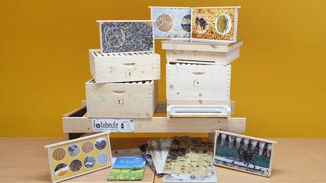 Fotobeuten der Kärntner Imkerschule: Bienenfreie Einblicke ins Bienenvolk