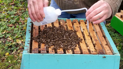 Angebot Varroabehandlungsmittel: Die Hauptbehandlungssaison gegen die Varroa beginnt!