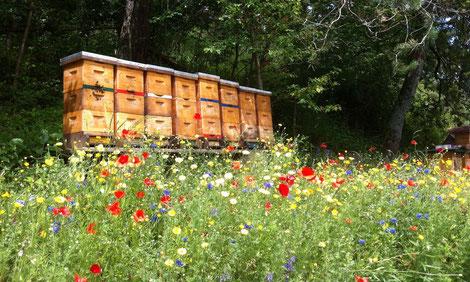 Dennoch garantieren Bio-Imker durch die Wahl der Aufstellungsorte, dass nur geeignete Flächen wie Wälder oder im Rahmen von Umweltprogrammen bewirtschaftete Kulturen von den Bienen beflogen werden.