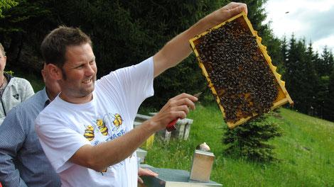 Im März 2020 startet in Kärnten der 1. Grundlagenkurs für ökologische Bienenhaltung
