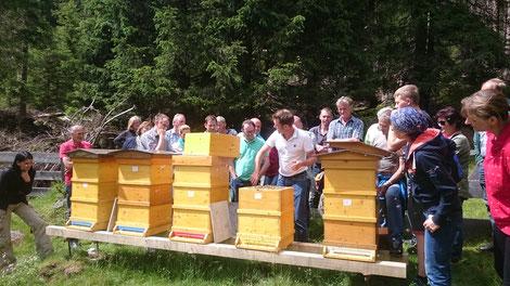 Kärntner Imkerschule: Der richtige Mix aus Wissen, Kompetenz und Erfahrung am Bienenstand