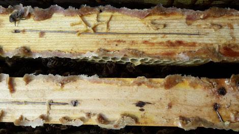 Erntereifer Pollen an der Oberleiste eines Rähmchens