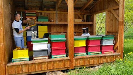 Imkerliche Arbeit ist notwendig und unaufschiebbar für die Versorgung der Honigbienen