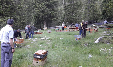 Stand 20. Juni 2017: Die Königinnen flittern auf der Belegstelle Mühldorfer Ochsenalm