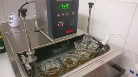 Im Labor der Kärntner Imkerschule herrscht ganzjährig Hochbetrieb