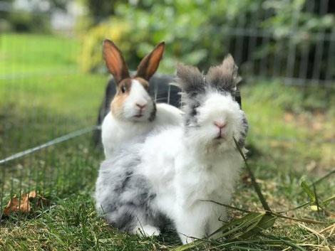 Ex- opvang konijntjes