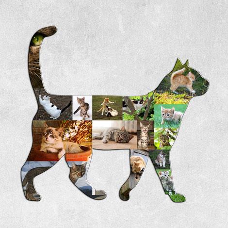 Idea regalo con le foto del tuo gatto, poster fotografico con le foto del tuo gatto.