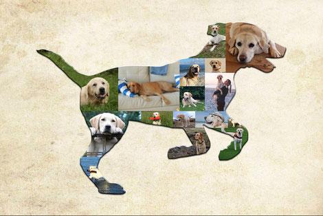 Idea regalo con le foto del tuo cane, regalo personalizzato con le foto del tuo cane